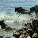 Der Mara - Schicksalsfluss der Serengeti