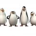Bilder zur Sendung: Die Pinguine aus Madagascar