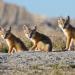 Wildnis Nordamerika - Mythos Wilder Westen