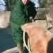 Der Pfundskerl: Mord im Zoo