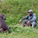 Bilder zur Sendung: Bama der Gorillamann
