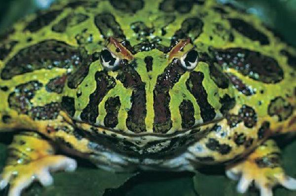 Bild 1 von 1: n-tv geht den Geheimnissen des Tierreichs auf den Grund.