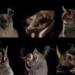 Bilder zur Sendung: Der Fledermausk�nig von Mexico