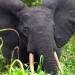 Gabun - Der Schatz im Regenwald
