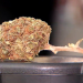 Das Geschäft mit Cannabis