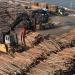 Abgeholzt! - Wie Europas letzte Urwälder verfeuert werden