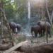 Bilder zur Sendung: Schwimmende Elefanten