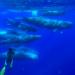Das Wesen der Wale