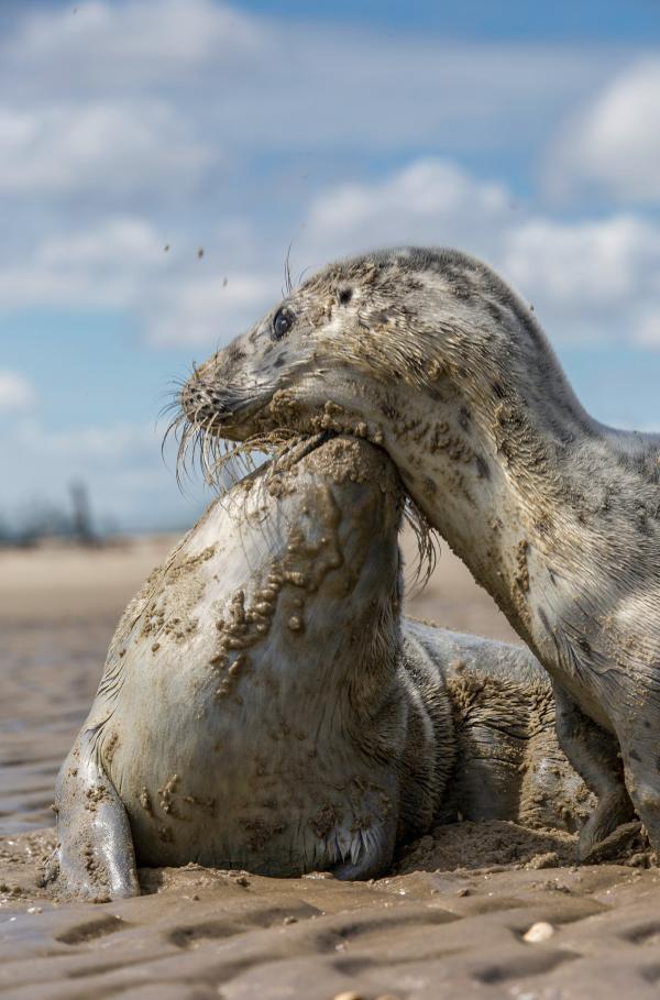 Das Wattenmeer - Leben zwischen Land und See