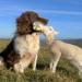 Bilder zur Sendung: Der Hund - Unserem besten Freund auf der Spur