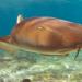 Der Hai - Magie eines Monsters
