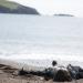 Mord auf Shetland - Die Nacht der Raben