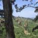Bilder zur Sendung: Dinotopia 5: Das Virus