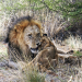Von Kapstadt in die Kalahari - Südafrikas unbekannte Westen