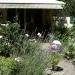 Wiesbadener Gartenfreuden