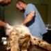 Bilder zur Sendung: Tier im Visier - Hinterhalt im Luchsrevier