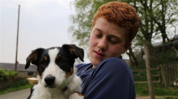 Bild 1 von 6: Ein Hundewelpe wirbelt das Familienleben ganz schön durcheinander. Zehn grundverschiedene Familien wagen es dennoch, ein aufgewecktes kleines Fellknäuel bei sich aufzunehmen.