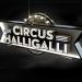 Bilder zur Sendung: CIRCUS HALLIGALLI