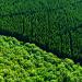 Unsere Wälder