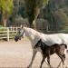 Weiße Pferde, Blaue Reben - In der Heimat der Lipizzaner und des Schilchers
