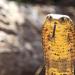 Kobra-Mafia - Die giftigsten Schlangen der Welt
