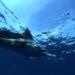 Tödliches Tempo - Wilder Ozean