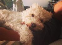 Notruf Hund - Einsatz für Cesar