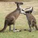 Fight Club der Tiere - Tropische Gefechte