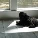 Hundebabys - Chaos auf vier Pfoten