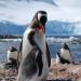 Die Pinguin-Post