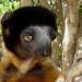 Madagaskar - Naturparadies im Indischen Ozean