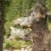 Europas Urwälder