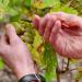 Bilder zur Sendung: Von der Traube zum Wein - Deutsche Winzer und Kellereien
