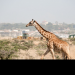 Wildes Nairobi