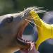 Die wilden 12 - Unsere Zoos im Westen