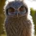 Bilder zur Sendung: Kurioses aus der Tierwelt