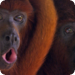 Bilder zur Sendung: Mythos Amazonas