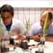 Die geheime Welt der Pflanzen