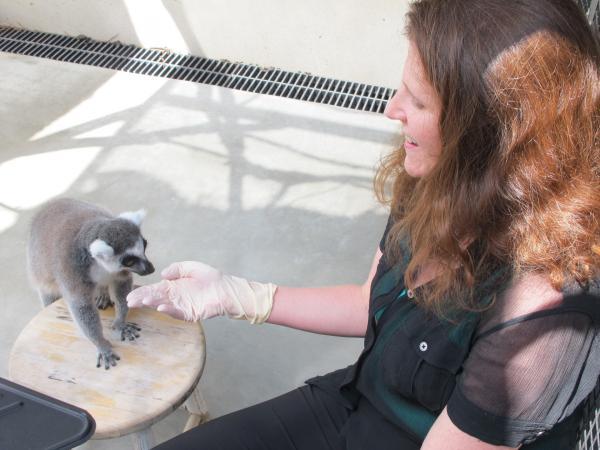 Bild 1 von 7: Tests mit Lemuren zeigen, dass auch Tiere rechnen können.