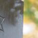 Schalom Genossen - Juden in der DDR