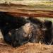 Lily - Ein Bärenleben