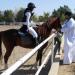 Hoch zu Ross: Die Pferde des Sultans