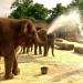 Bilder zur Sendung: Die Sendung mit dem Elefanten