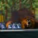 Grizzy & die Lemminge