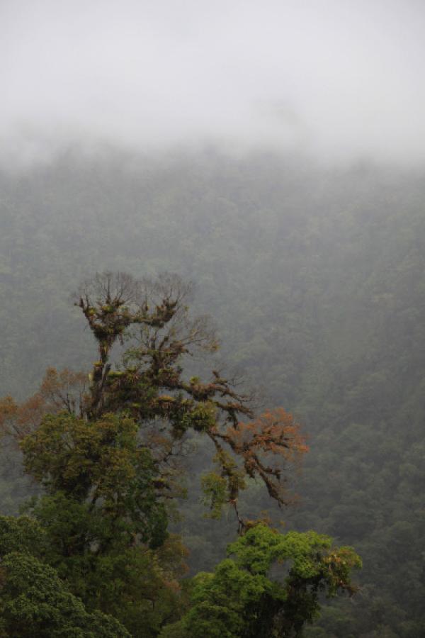Bild 1 von 6: Im Verh?ltnis zu seiner Gr?§e ist Costa Rica weltweit das Land mit der beeindruckendsten Artenvielfalt.