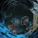 Bilder zur Sendung: Coraline