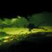 Bilder zur Sendung: In den Tiefen des Okawango