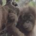 Bilder zur Sendung: Wildes Indonesien