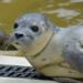 Bilder zur Sendung: Seehund, Puma & Co