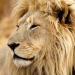 Bilder zur Sendung: Lionsrock - Die Heimkehr des Königs